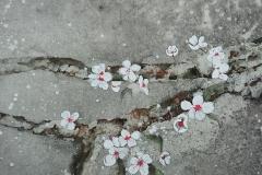 Pépites de printemps